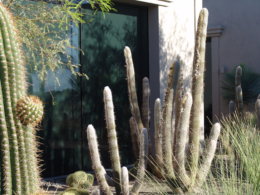 Tucson-Landscaping-4
