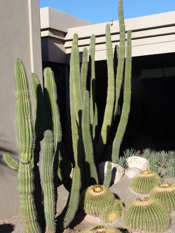Tucson-Landscaping-6